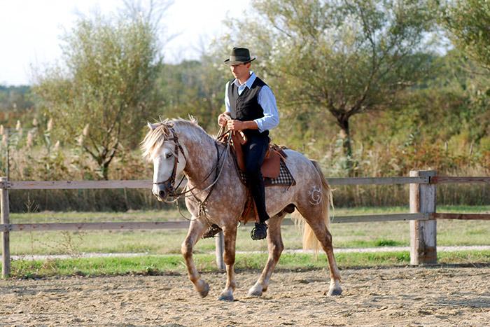 Concours élevage - Photo Martel