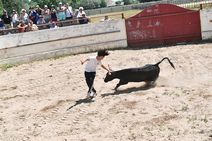 Démonstration de course camarguaise - Photo G. Lebreton